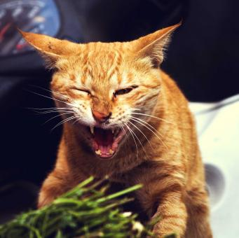 Free Stock Photo of Angry Cat