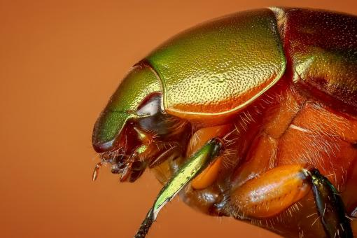 Free Stock Photo of Beetle