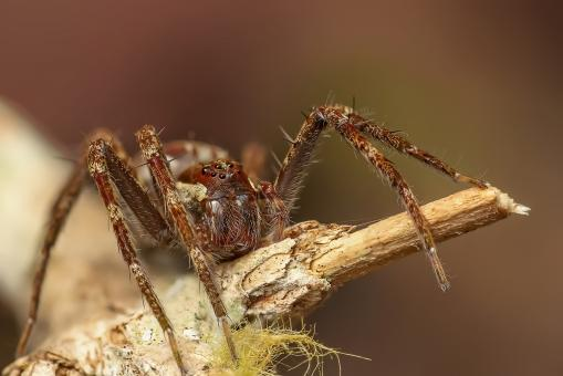 Free Stock Photo of Brown Spider