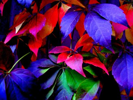 Free Stock Photo of Colorful Leaves