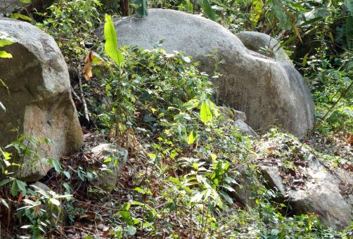 Free Stock Photo of Jungle Boulders