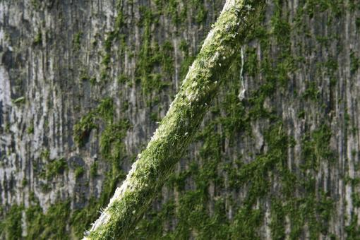 Free Stock Photo of Algae
