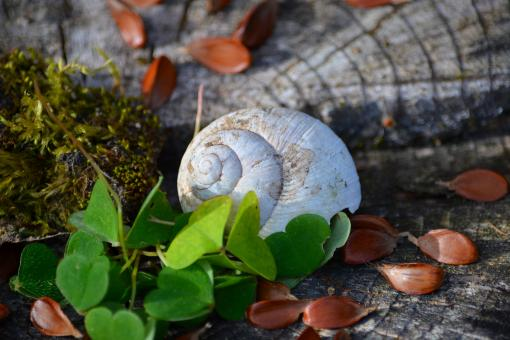 Free Stock Photo of Shell