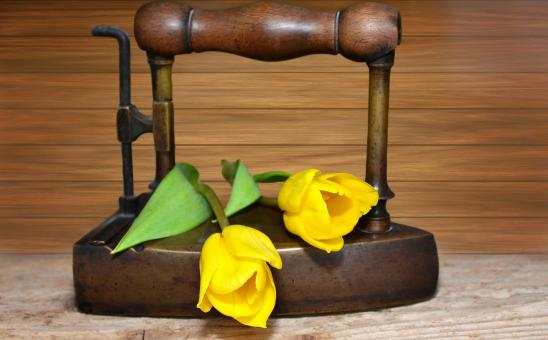 Free Stock Photo of Tulips on the Iron