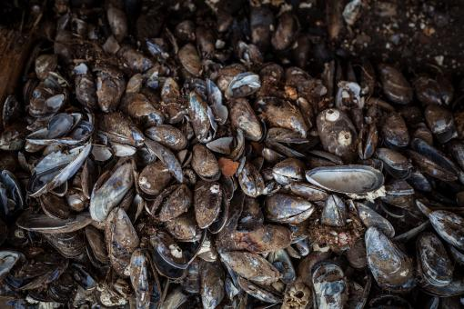 Free Stock Photo of Old Sea Shells Texture