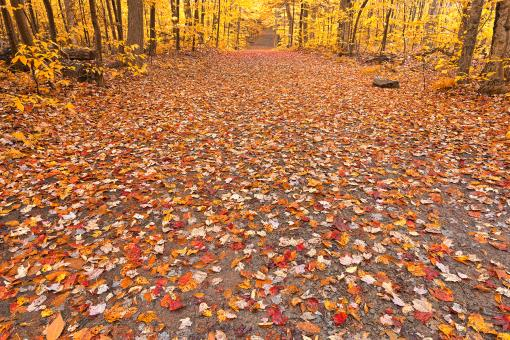 Free Stock Photo of Golden Fall Forest Trail - HDR