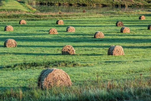 Free Stock Photo of Bales