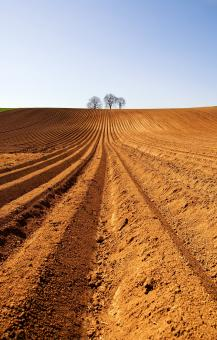 Free Stock Photo of Arable