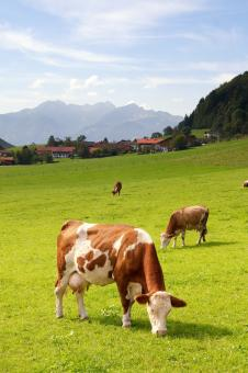 Free Stock Photo of Upper Bavaria