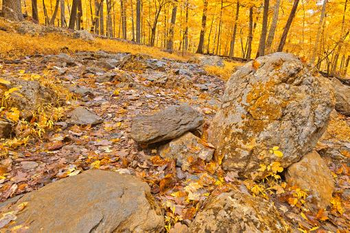 Free Stock Photo of Catoctin Mountain Trail - Gold Fantasy HDR