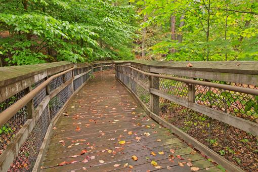 Free Stock Photo of Catoctin Mountain Boardwalk - HDR