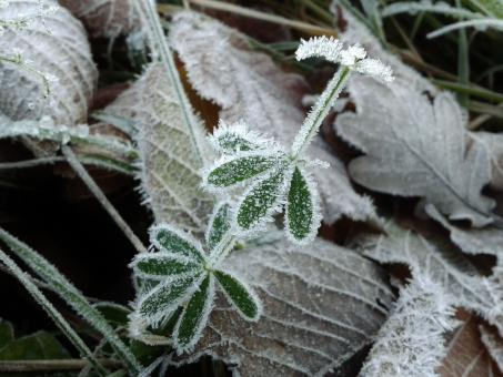 Free Stock Photo of Frost