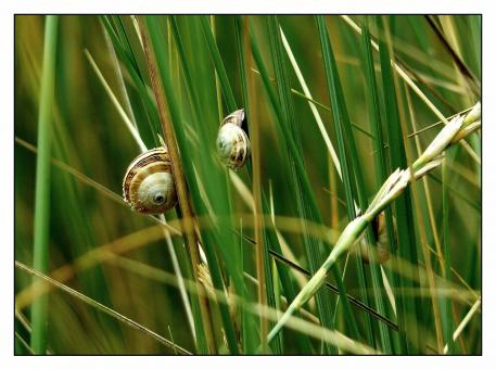 Free Stock Photo of Snails