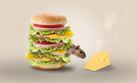 Free Stock Photo of Mouse in Cheese Burger