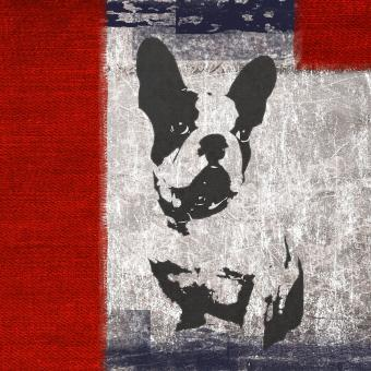 Free Stock Photo of Bull Dog Texture