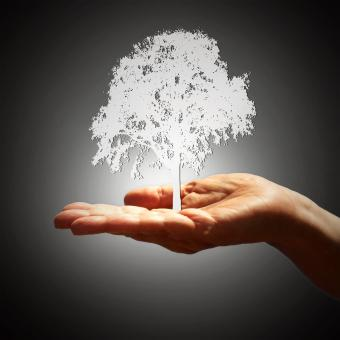 Free Stock Photo of Tree Silhouette on Hand - Growth Concept - Dark Background