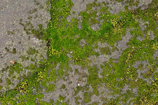 Free Stock Photo of Mossy Stone - HDR Texture