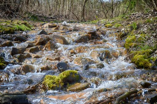 Free Stock Photo of Spring creek in the wood