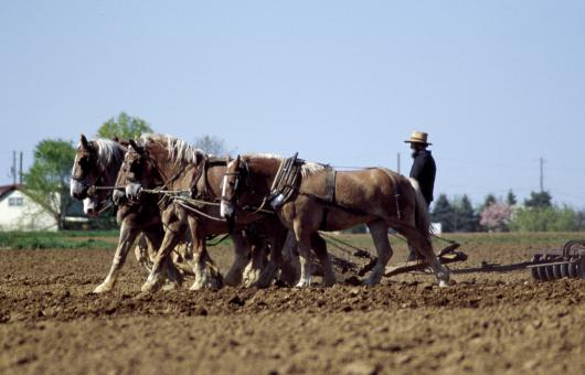 Free Stock Photo of Farming with Horses