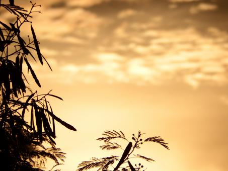 Free Stock Photo of Tropical Trees Silhouette at Sunset