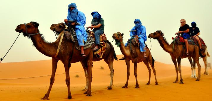 Free Stock Photo of Camel Riders