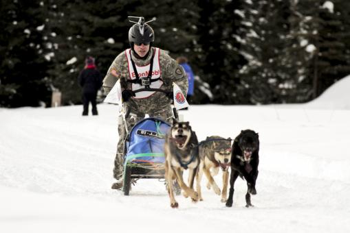Free Stock Photo of Dog Sled Team