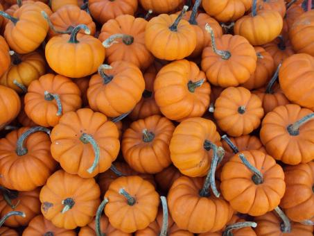 Free Stock Photo of Small Pumpkins