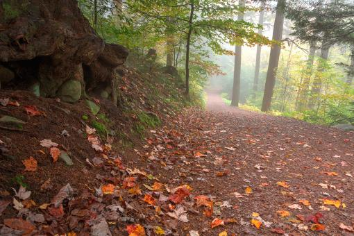 Free Stock Photo of Misty Autumn Trail - HDR