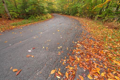 Free Stock Photo of Winding Autumn Forest Road - HDR