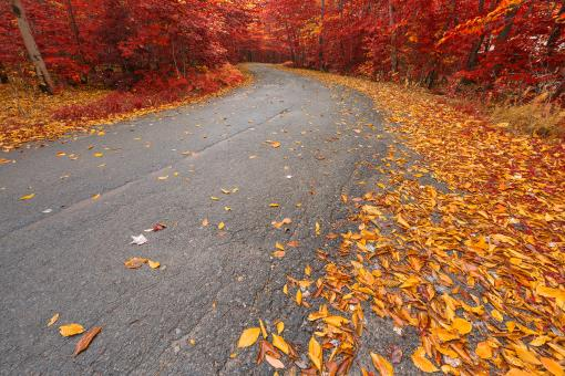 Free Stock Photo of Winding Autumn Forest Road - Ruby Gold HDR
