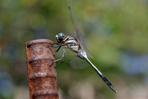 Free Stock Photo of Dragonfly on the Metal