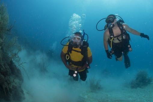 Free Stock Photo of Scuba Divers in the Ocean