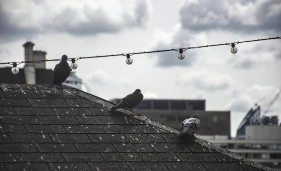 Free Stock Photo of Birds on Rooftop in London