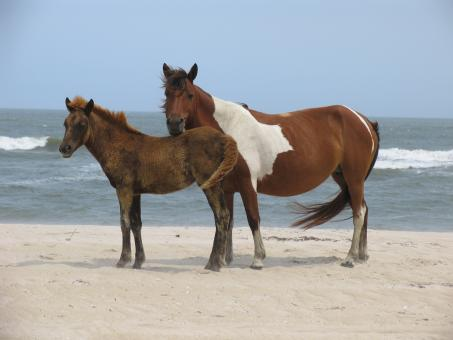 Free Stock Photo of Wild Horses on the Shore