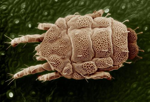 Free Stock Photo of Yellow Mite