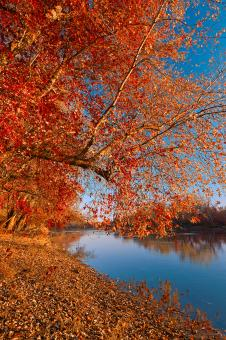 Free Stock Photo of Golden Potomac Hour - Ruby Autumn HDR