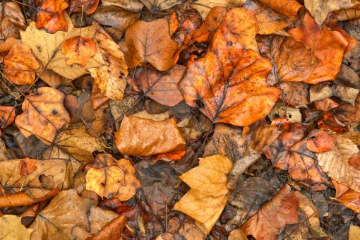 Free Stock Photo of Drowning Autumn Decay - HDR