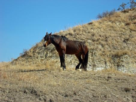 Free Stock Photo of Feral Horse