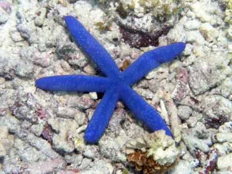 Free Stock Photo of Starfish in the Bottom of the Ocean