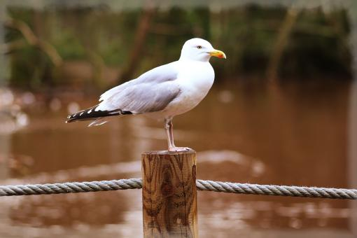 Free Stock Photo of Perching Seagull