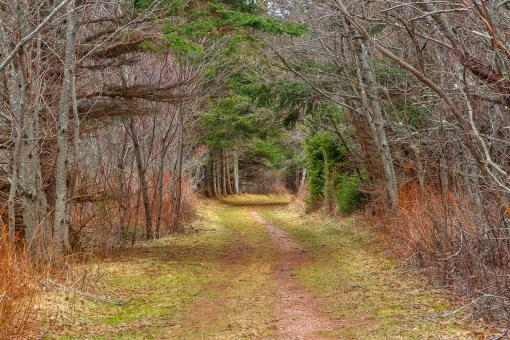 Free Stock Photo of Cavendish Forest Trail - HDR
