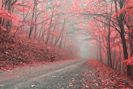 Free Stock Photo of Misty Forest Road - Tickle Me Pink HDR