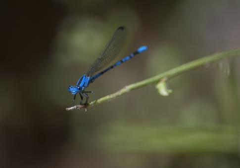 Free Stock Photo of Damselfly on the Plant