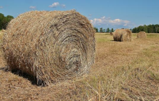 Free Stock Photo of Hay Bales