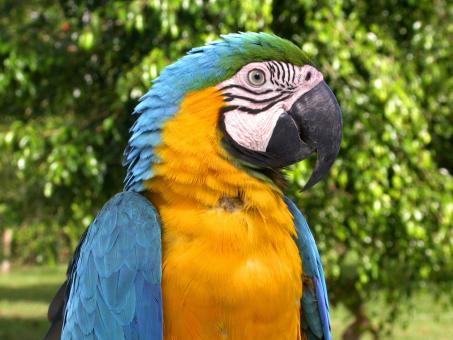 Free Stock Photo of Colorful Macaw