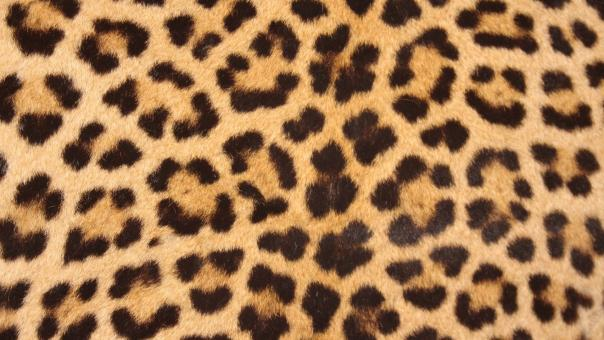 Free Stock Photo of Leopard Skin