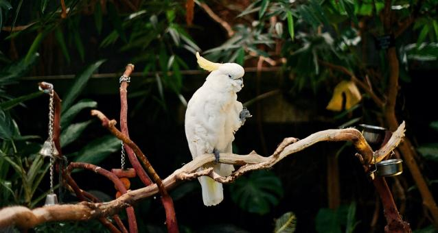 Free Stock Photo of White Parrot in the Zoo