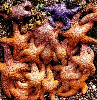 Free Stock Photo of Group of Starfish