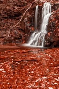 Free Stock Photo of Red Grove Waterfall
