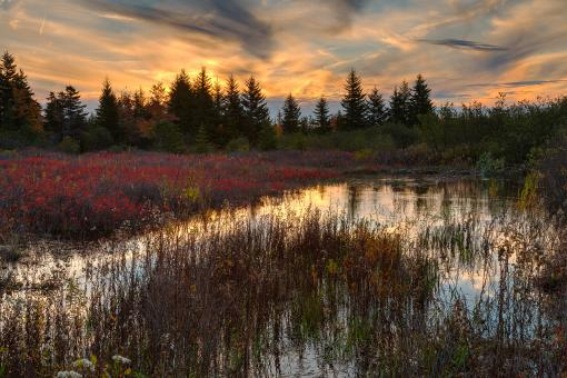 Free Stock Photo of Autumn Dolly Sods Sunset - HDR